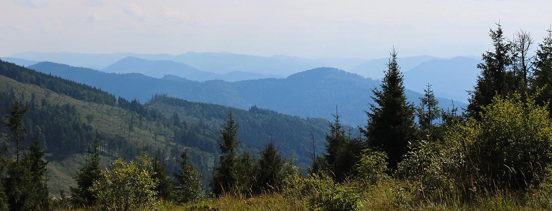 Jachtreizen in Europa Roemenië