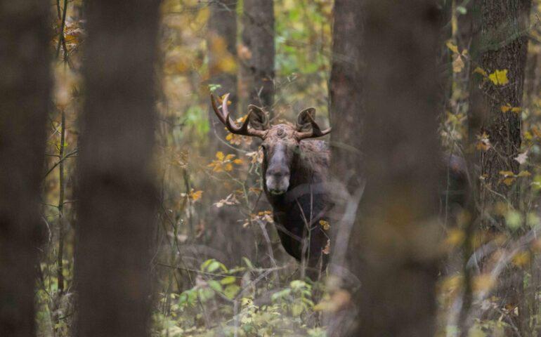 Jagen in Estland
