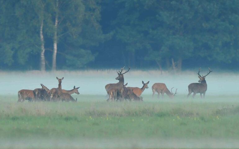 Jagen in Polen