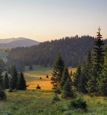 Jagen in Roemenië