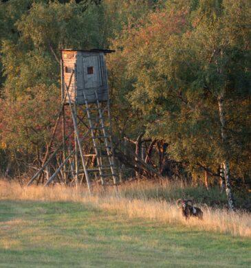 Jagen in Tsjechië