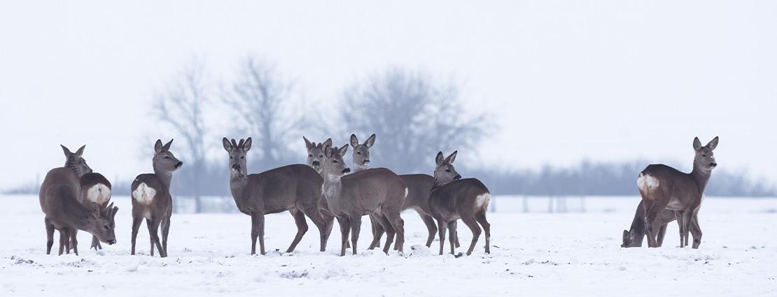 Jagen in Duitsland